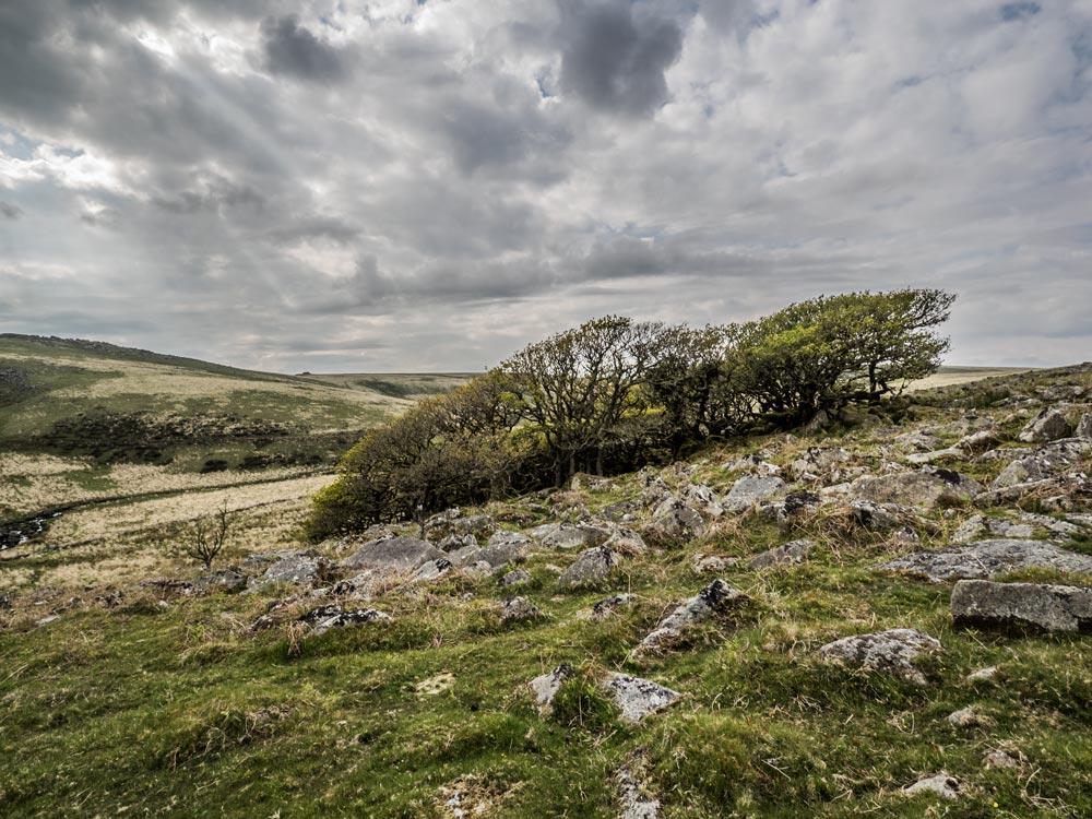 Mythago-Wood-or-Wistman's-Wood,-North-Copse-(409-m)3